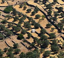 Sifnos - olive terraces by Ian Mac