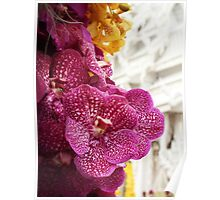 Thai Orchid Poster