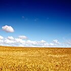 North Yorkshire Cornfield 1 by eatsleepdesign