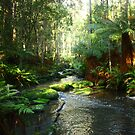 River and Forest by Andrew S