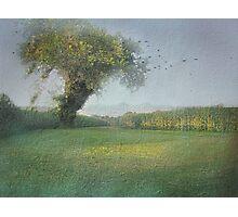 Tree in the Cornfield Photographic Print