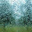 Rain Trees by Jason Brewer