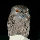 Tawny Frogmouth Owl by Sharon Brown