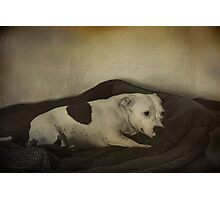 Ruby's Bed Time Photographic Print