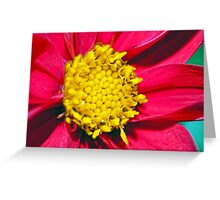 Flower Macro Greeting Card