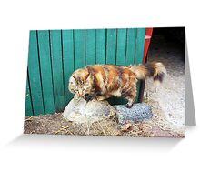 Claremont Alley Cat With Tiger Stripes - 14 08 13 Greeting Card