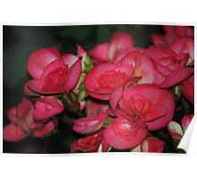 Flower Beauty - 10 Poster