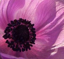 One Delicate Purple Anemone Coronaria Flower Sticker