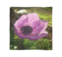 One Delicate Purple Anemone Coronaria Flower Scarf