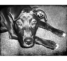 Loyal Friend Photographic Print