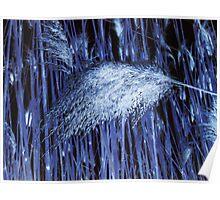 Blue Reeds Poster