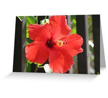 Flower Beauty - 13 Greeting Card