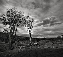 Natures Struggle by Peter Denniston