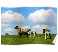 Ewe and me and a sky so blue Poster