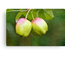 Textured Apples Canvas Print