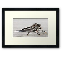 Insect that devours flys Framed Print