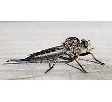 Insect that devours flys Photographic Print