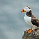 Puffin on rock by Margaret S Sweeny