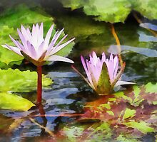 Two Purple Water Lotus by Susan Savad