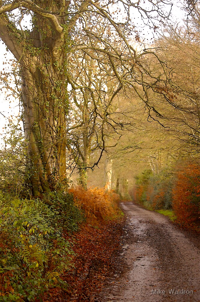 The Road From Beacon Cross To Talewater .. by Mike  Waldron