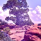 Canyon de Chelly Tree by David Davies
