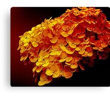 Midas Blossoms Canvas Print