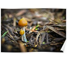 Pair of Mushrooms Poster