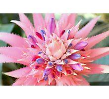 Pink Floral Succulent Photographic Print