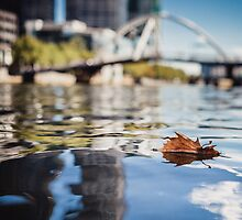 Leaf Floating on the Surface of a River by jamjarphotos