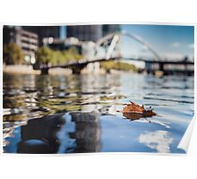 Leaf Floating on the Surface of a River Poster
