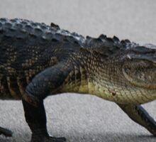 Gator Crossing Sticker