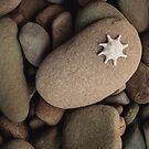 Starfish on smooth rocks along the shore by jamjarphotos