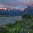 Waimakariri River _ New Zealand by Barbara Burkhardt