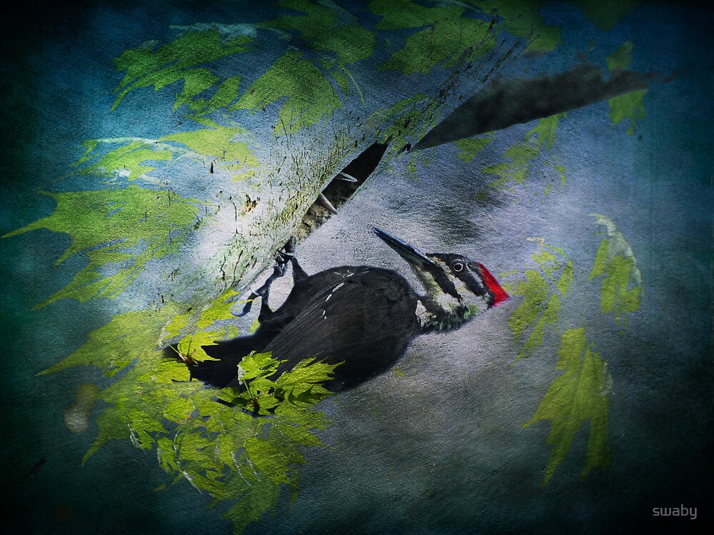 Pileated Woodpecker by swaby