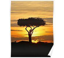Boscia tree against the Kenyan sunset (watercolour) Poster