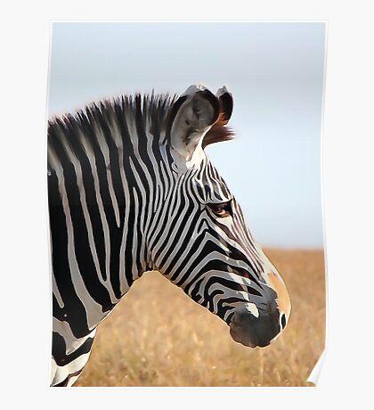 Grevy's zebra (watercolour) Poster