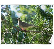 Good Mourning Dove! Poster