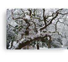 Snow on Tree Canvas Print