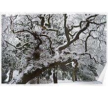 Snow on Tree Poster