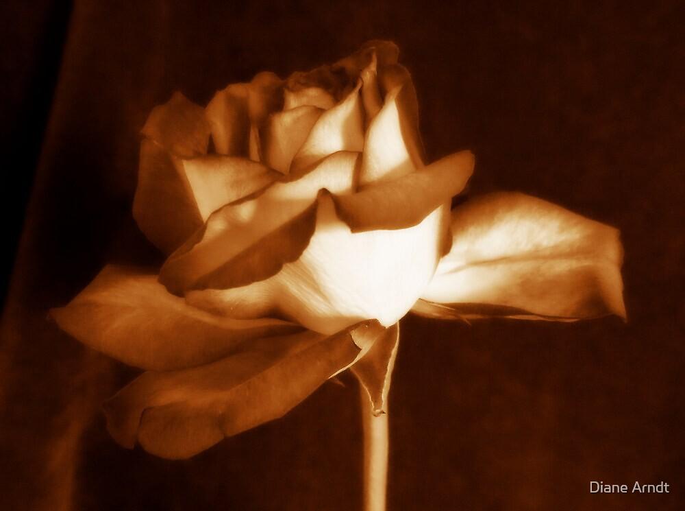 Caramel Wishes by Diane Arndt