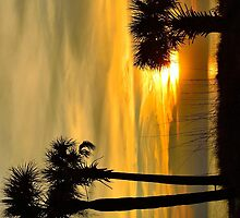 Family of Palms @ Sunset by Zzenco