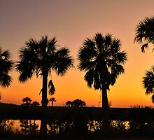 4 Palms In After Glow by Zzenco