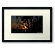 Sunset Through The Grass Framed Print