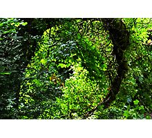 Greenery Photographic Print