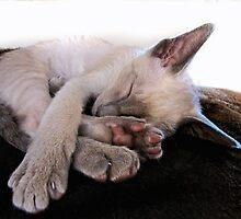 Sleep baby, sleep.... by Sally Green
