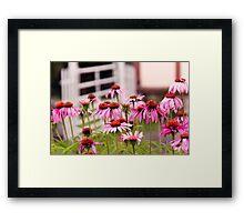 Flower - Cone Flower - In an English garden  Framed Print