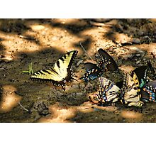 Swallowtail Convention Photographic Print