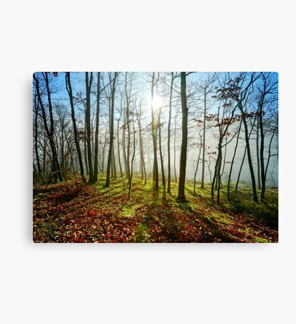 Beauty of winter forest with moss, sunny day, nature concept Canvas Print