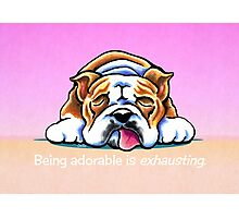 Being Adorable Bulldog Pink Photographic Print
