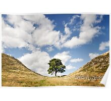 Sycamore Gap, Hadrian's Wall Poster